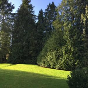 L'arbre et la manière